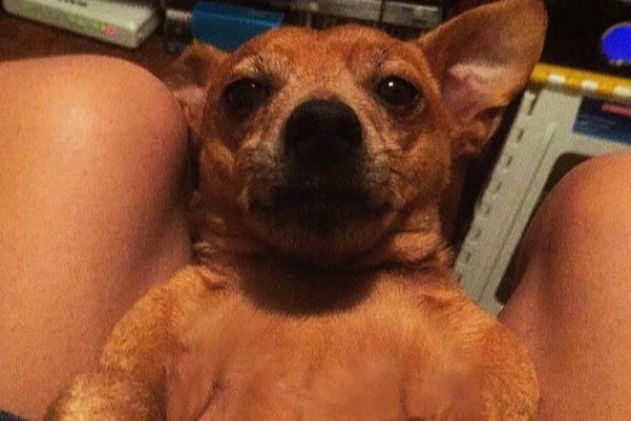 cachorro desaparecido Alvim