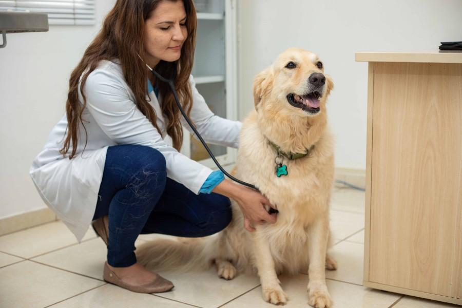 Disfunções hormonais atingem cães e gatos e podem levar à morte   Santa Portal