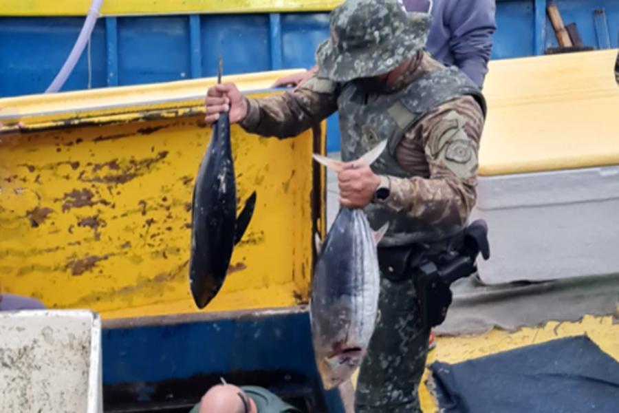 Cinco toneladas de atum são apreendidas na Operação Ágata | Santa Portal